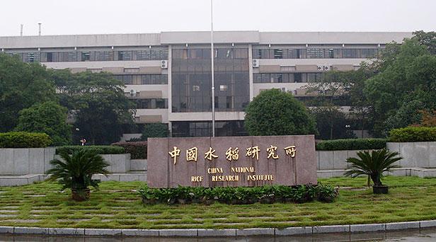 中国水稻研究所-华益案例